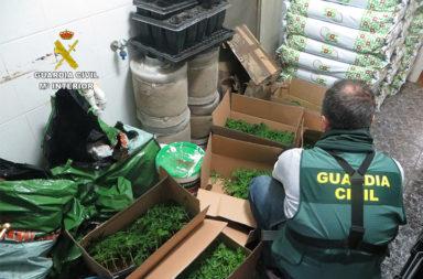 cultivo marihuana indoor adra 2021