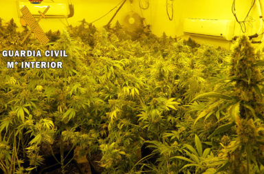 cultivo indoor Adra junio 2021